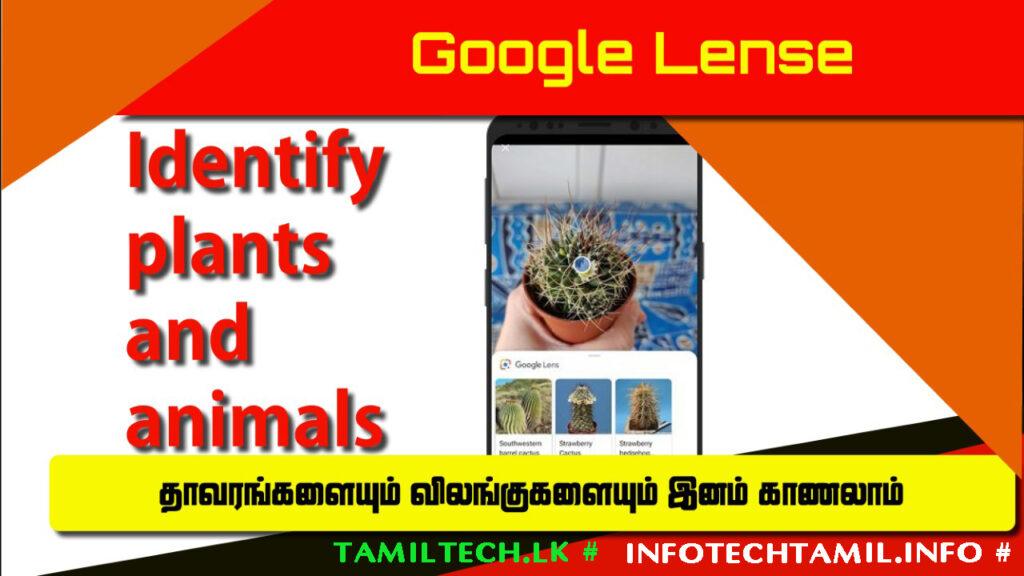 Google Lens Identify Plants